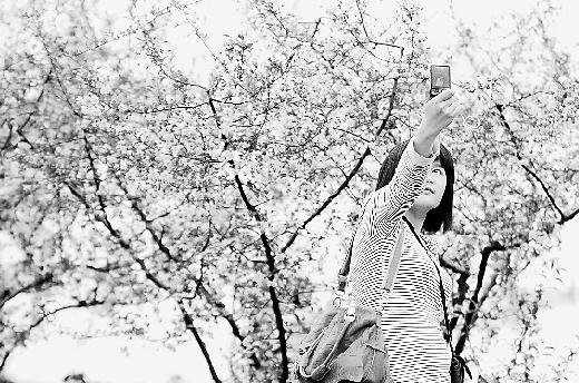 一位游客在樱花树前自拍(资料照片)