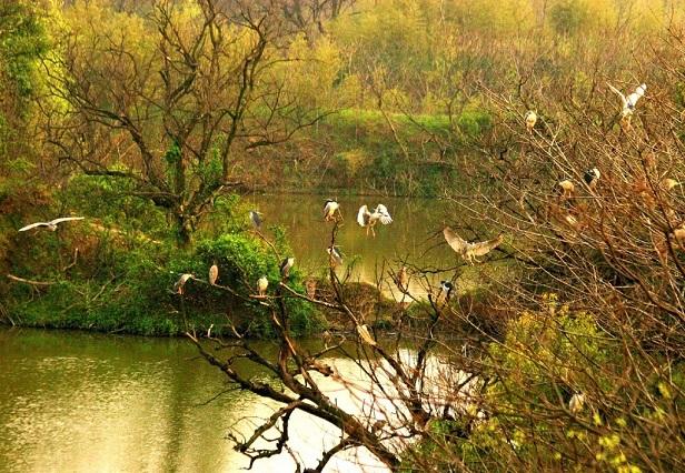 现在的西溪湿地,总有一处美在心里